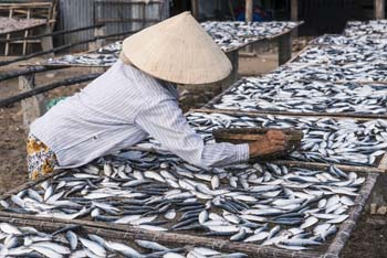 Extensive violations of human rights in the fishing industry in Thailand