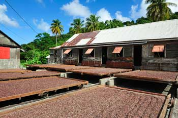 Combating child labour in the cocoa industry